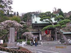 鎌倉の観梅