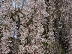 2013.3 山梨~身延山の桜~