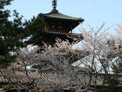 201004_01-桜を見に奈良・京都へ Cherryblossoms in Nara / Nara