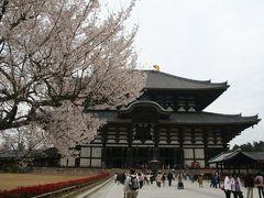201004_02-桜を見に奈良・京都へCherryblossoms in Nara / Nara