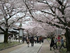 201004_04-桜を見に奈良・京都へ-Cherryblossom in Kyoto