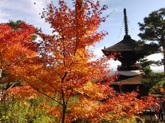 京都('12 紅葉狩り)