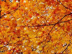 紅葉と温泉、これ最高。2013 ーその1ー