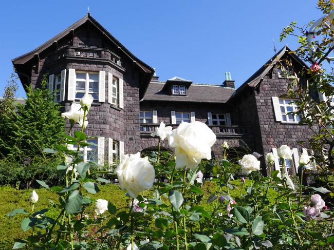 10月12日から行われている旧古河庭園の秋のバラフェスティバルも今日までということで台風一過の晴天の中、早朝から行ってきました。<br />何度も訪れている旧古河庭園ですが、ラッキーなことに通常予約制の10:30〜のガイド付き旧古河邸本館の見学をすることができました。