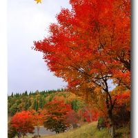 Solitary Journey [1284] 美しい紅葉、秋色に彩られた山々。紅く染まったモミジがいっぱい!<もみの木森林公園> 広島県廿日市市