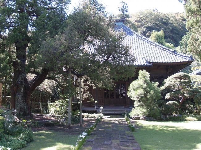鎌倉郡には江戸時代に成立した三十三観音霊場があった。これは鎌倉郡全域を対象とした観音霊場である。しかし、明治初年の廃仏毀釈により廃寺となったり、町の外に移転してしまった寺もある。<br /> なお、大正から昭和初期にかけて新たに設定された観音霊場である鎌倉三十三観音霊場(http://4travel.jp/traveler/dr-kimur/album/10825353/)がある。これは合併して鎌倉市になる以前の旧鎌倉町内の寺に限定して霊場を新たに選別したものである。鎌倉郡三十三箇所と鎌倉三十三観音霊場では高々6箇所の霊場(壽福寺、 海蔵寺(向陽庵)、来迎寺(法花堂)、建長寺(千手堂)、東慶寺、円覚寺佛日庵)しか重複してはいない。したがって、鎌倉郡三十三箇所と鎌倉三十三観音霊場とは全くの別ものと考えて良い。<br /> どうやら、人形町に移った第1番礼所以外にも旧鎌倉郡内に26箇所程度の礼所が残っているようだ。<br /><br /> 鎌倉郡三十三霊場の一覧<br />礼所 寺名 所在地 <br />第1番 新清水寺 鎌倉市雪ノ下(現在は大観音寺(東京都中央区日本橋人形町))<br />第2番 松岸寺花光院 鎌倉市扇ヶ谷2<br />第3番 壽福寺 鎌倉市扇ヶ谷1<br />第4番 向陽庵(海蔵寺) 鎌倉市扇ヶ谷4<br />第5番 正覚寺 逗子市小坪5<br />第6番 報身院 逗子市小坪7<br />第7番 香蔵院 逗子市小坪7<br />第8番 法花堂(来迎寺) 鎌倉市西御門<br />第9番 建長寺(飛石山) 鎌倉市山ノ内<br />第10番 建長寺(千手堂) 鎌倉市山ノ内<br />第11番 東慶寺 鎌倉市山ノ内<br />第12番 円覚寺佛日庵 鎌倉市山ノ内<br />第13番 亀井堂 鎌倉市台(市場公会堂)<br />第14番 多聞院岡の堂 鎌倉市大船<br />第15番 法安寺 横浜市栄区笠間5<br />第16番 駒形観音堂(永林寺) 横浜市栄区公田町<br />第17番 坂中山観音堂(光明寺) 横浜市栄区上郷町<br />第18番 浄念寺 横浜市港南区野庭町<br />第19番 長福寺さくら堂 横浜市戸塚区舞岡町<br />第20番 円福寺 横浜市戸塚区舞岡町<br />第21番 蔵田寺さそう堂 横浜市戸塚区上倉田町<br />第22番 清源院朝日堂 横浜市戸塚区戸塚町<br />第23番 観音寺 横浜市泉区新橋町<br />第24番 大石寺観音堂 横浜市泉区上飯田町<br />第25番 正法寺 横浜市泉区和泉町<br />第26番 中田寺稲葉堂 横浜市泉区中田北2<br />第27番 蓮花寺(宝寿院願行寺) 横浜市戸塚区汲沢4<br />第28番 大運寺浅間堂 横浜市戸塚区原宿3<br />第29番 玉泉寺 横浜市栄区金井町<br />第30番 大雲庵(燈明寺) 横浜市戸塚区小雀町<br />第31番 正福寺(勝福寺) 横浜市栄区飯島町<br />第32番 二伝寺 藤沢市渡内3<br />第33番 慈眼寺 藤沢市渡内<br />(表紙写真は鎌倉郡三十三箇所第三番札所の壽福寺本堂(仏殿))