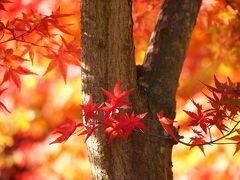 木漏れ日の中で・・・紅葉を愛でて・・・ ★秋保温泉 磊々峡(らいらいきょう)★