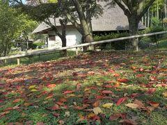 秋のブラチャモリ 豊中・池田編 2013