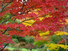 もうすっかり秋色な。。黄葉&紅葉の昭和記念公園