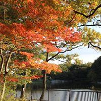 吉見町 八丁湖公園 今年の紅葉狩りは、ちょ~近場で我慢!?