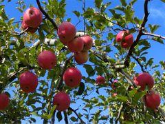 初冬の軽井沢へ りんご狩りとアウトレットショッピング