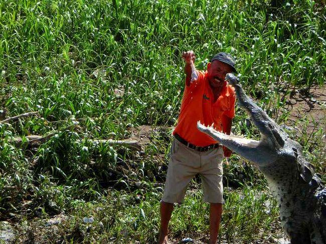 プンタレナス寄港・ターコレス川クルーズ<br />ワニの餌やりを動画で紹介します<br />下記をクリック<br /><br />http://youtu.be/uq8fe5RhUvo<br /><br />