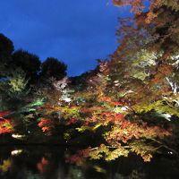 2011年秋 紅葉の季節に行く関西旅行Part4(ライトアップでも美しい京都の紅葉名所)