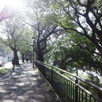 そうだ、散歩に行こう。 「えっ、こんな都会で桃源郷を見つけてしまった」の巻