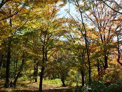 2013年11月16日 箱根の紅葉は見頃です 箱根レイクホテル周辺 箱根ビジターセンター