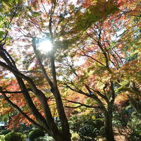 四国霊場88番 大窪寺の紅葉