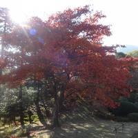 秋の箱根・旦那様のお母様と初旅行VOL.1