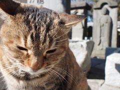 ☆猫巡礼の旅② ー鎌倉 光明寺篇☆