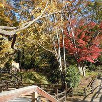 紅葉の中、気持ち良い散歩なら…玉川上水遊歩道!