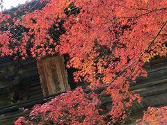 京都('13 紅葉狩り)