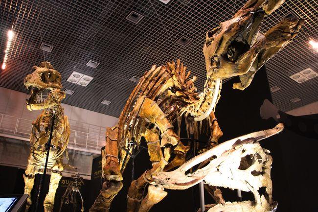 ゴビゴビ砂漠で恐竜発掘! 【大恐竜展/上野/国立科学博物館】