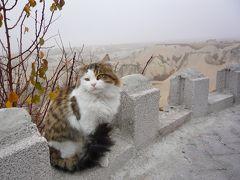 猫ときどきトルコ④~カッパドキア→コンヤ編~