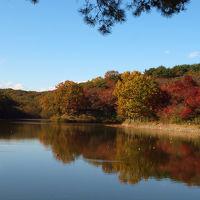ご存知ですか? 素晴らしい紅葉の八丁湖 上