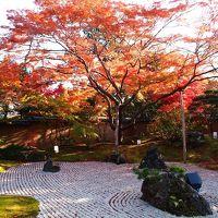 昼間の円通院の庭園紅葉と・・・円通院だけじゃない!松島紅葉ライトアップ2013を楽しむ!