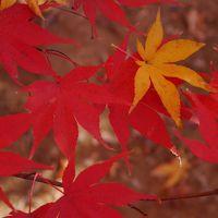 ビアンキFRETTA☆川口 安行 小林もみじ園・興禅院の紅葉☆2013/11/24