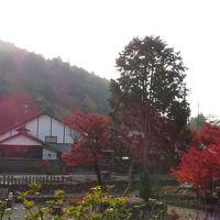 柳谷観音、揚谷寺の紅葉
