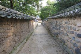 2012初秋、韓国旅行記25(8)安東、安東河回村、鶏頭の花、樹齢600年余の欅