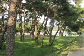 2012初秋、韓国旅行記25(10)安東、安東河回村、忠孝堂、松林と洛東江