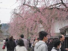 みちのく小京都・角館へ~見ごろを迎えていた角館の桜祭りは大賑わいだった~