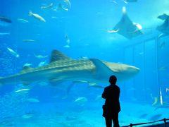 マイルで初沖縄☆離島まで行ってきました♪最終日は美ら海水族館など。