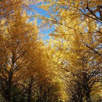2013紅葉 光が丘公園の紅葉
