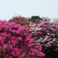 2009.5・2011.4 群馬(館林つつじが岡公園)