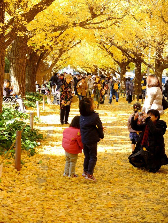 「神宮外苑いちょう祭り」が11/16~12/9まで開かれてと聞き、昨年より5日早く行ってきました。<br />いちょうの並木みちは上も下も黄色一色でした。<br /><br /><さんぽコース>  <br /> 青山一丁目~「神宮外苑いちょう並木」~権田原~迎賓館前~<br /><br /> ホテルニューオータニ~ 赤坂見附