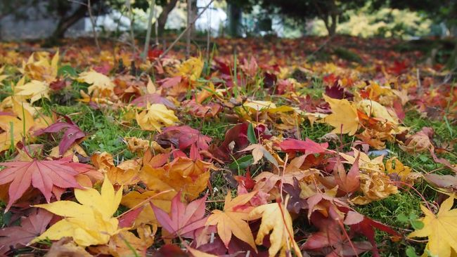 TVのニュースで、京都の紅葉だよりを見ました。<br />そう言えば、今年の秋は、珍しく京都へ行ってないなあ。<br /><br />そうや・・・京都へ行こう!<br /><br />というわけで、<br />今日は、お茶をしに、<br />宇治へ行ってみることにしました。<br />