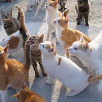 猫の島 愛媛県大洲市 青島