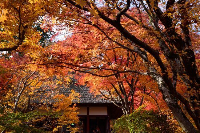 2周続けての紅葉巡りです。今回は嵐山に行ってきました(^_^)v<br />先週行ってからかなり冷え込みが続いたので紅葉まっ盛りでした(^O^)<br />今回は今まで嵐山の中で行っていなかった宝筺院と常寂光寺の紅葉を見てきました(*^^)v<br />ちなみに嵐山という地名の由来が紅葉の時期にモミジが風に吹かれて嵐の様に舞うことからついたと観光タクシーの運転手サンが言っておられました。