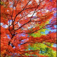 【富士山と紅葉 Vol.2】 鮮やかすぎて、じぇじぇじぇ!箱根美術館から御殿場に行くなら、今でしょ!!