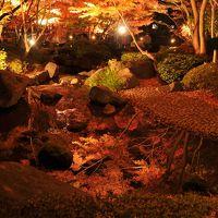 小さな旅 大田黒公園の紅葉 ライトアップ