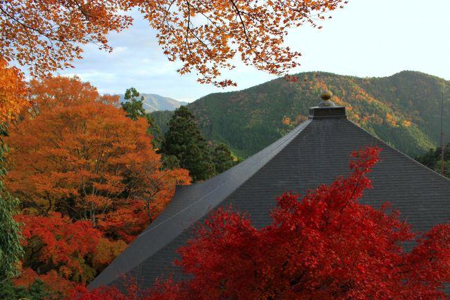 2年程前迄は毎週のように京都を歩き周っていましたが<br />最近は足が遠のいていました。<br />人混み覚悟で久しぶりに行ってみようか~<br />紅葉の京都はやっぱり早朝出発しないとなぁ...<br />わかってはいたけれど~前日会社の呑み会で<br />熱燗くぃっくぃ~<br />早朝起きれませんでした(笑)<br />阪急河原町~四条京阪~出町柳<br />叡山電車で切符を買うのに行列~<br />券売機が少ないし、ICカードが使えません。<br />鞍馬行の切符は駅案内所で、すっと買えましたが<br />電車は通勤ラッシュなみの混みようでした。<br />もみじのトンネルでは、アナウンスが流れ<br />電車はゆっくり走ります~ほんの一瞬です。<br />鞍馬も結構混みあってましたねぇ<br />ケーブルカーは30分待ち<br />歩きました~本殿金堂まででも結構しんどい~<br />天のエネルギーが降臨するといわれている<br />鞍馬寺正殿前のパワースポット「六芒星」で大行列~<br />石段~未舗装の参道をぜぇぜぇしつつ歩き<br />奥ノ院へ貴船に降りる事も出来ますが戻ります。<br />夕刻近いのに本殿の「六芒星」はまだ大行列~<br />灯籠が点る頃山門を降りたら<br />えっ 鞍馬駅からここまで行列?!<br />貴船口駅まで一駅なのにこんな並ぶんですか~~~<br /><br />貴船編へ続きます...<br /><br /><br />
