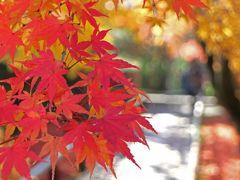 今年最後の紅葉散歩は、鷹峯地区を歩いてみました♪