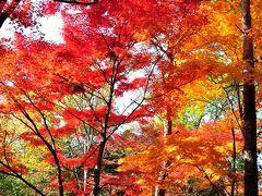 2013 明治村(7)  紅葉を愛でながら博物館明治村散策