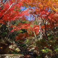 晩秋の三原の風物詩を撮る旅(その2、紅葉の名所巡り)