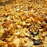 ぶらぶらっと麻布十番 ~秋の終わりの欲張り散歩~