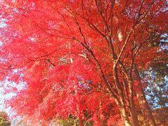 自転車でウロウロ…・広見公園の紅葉 2013.12.11