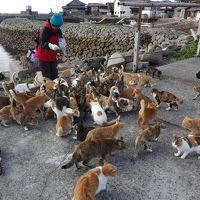 瀬戸内のネコの島~愛媛 青島で猫にまみれてきました~ vol.1 アプローチ編