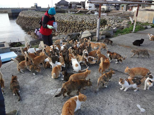 人口15人にネコが100匹以上!<br />瀬戸内海に浮かぶ小さな島、青島は猫の楽園!!<br />1日に2本しかない定期航路で海を渡り、<br />1日たっぷり青島を楽しんできました。<br /><br />